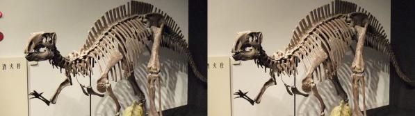 フクイサウルス(交差法)