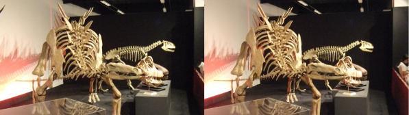 トゥジャンゴサウルス(交差法)