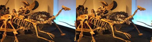 恐竜骨格①(平行法)