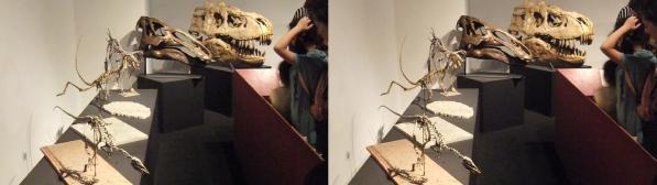 恐竜骨格②(交差法)