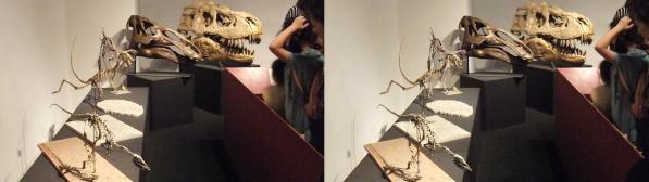 恐竜骨格②(平行法)