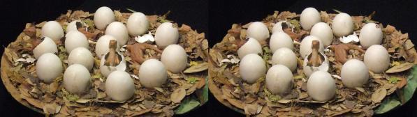 マイアサウラの巣(平行法)