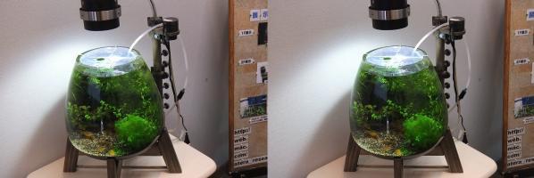テラリウム展示販売会11.06.18⑮(交差法)