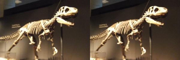 アロサウルス(交差法)