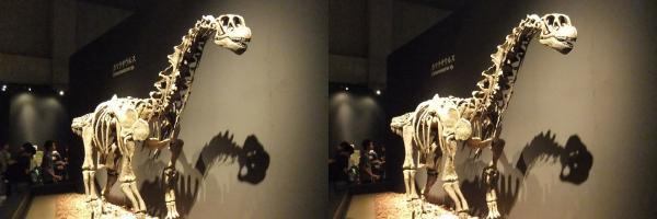 カマラサウルス(交差法)