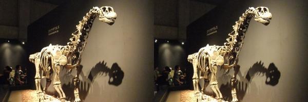 カマラサウルス(平行法)