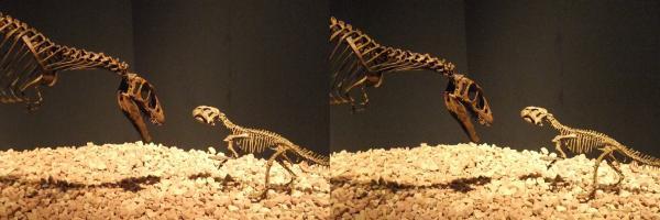 ラプトレックス・プシッタコサウルス(平行法)