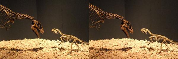 ラプトレックス・プシッタコサウルス(交差法)