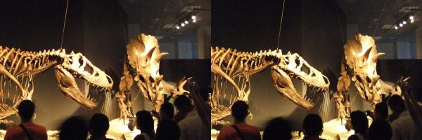 ティラノサウルス・トリケラトプス?(平行法)