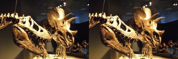 ティラノサウルス・トリケラトプス?(交差法)