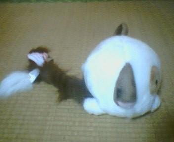 ぱんにゃちゃん