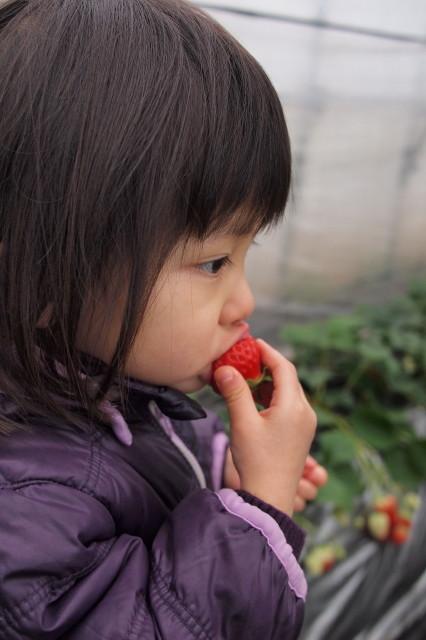 自分で収穫したいちごはおいしいね