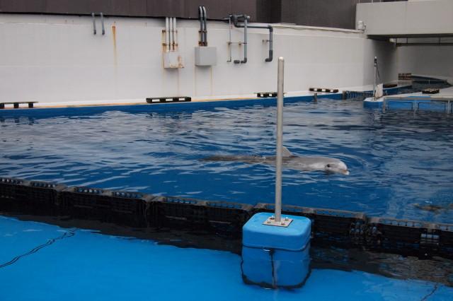 イルカさんに餌をあげられます