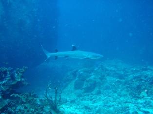 shark1_20091026202406.jpg
