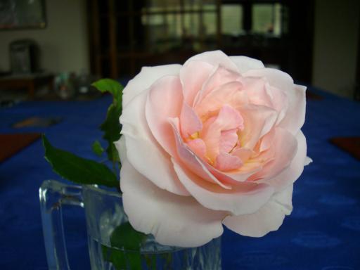 秋のバラ2