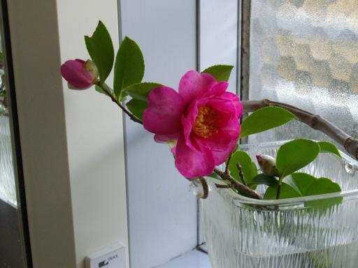 部屋に花を2
