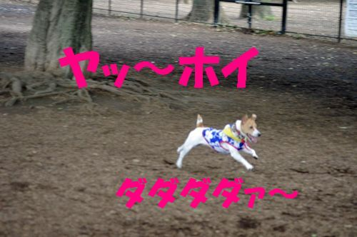 走る・走る!
