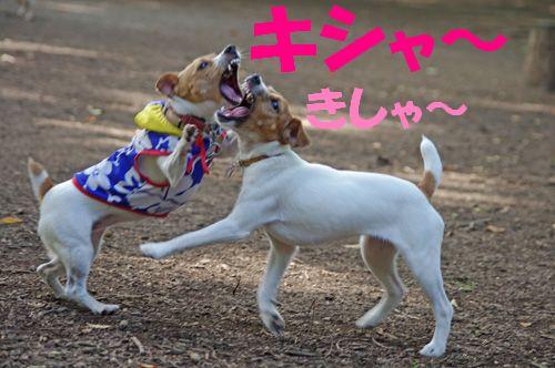 ガウガウ最高ッ!
