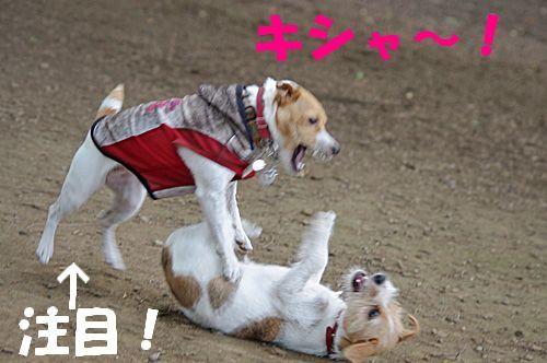 大ジャンプ~!