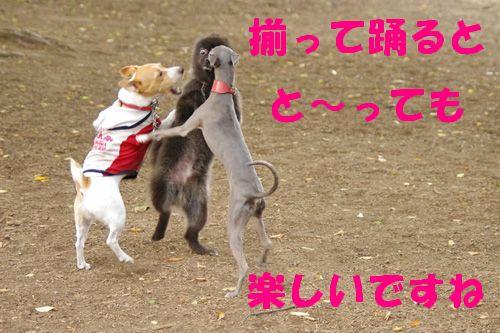 輪になって踊ろう~