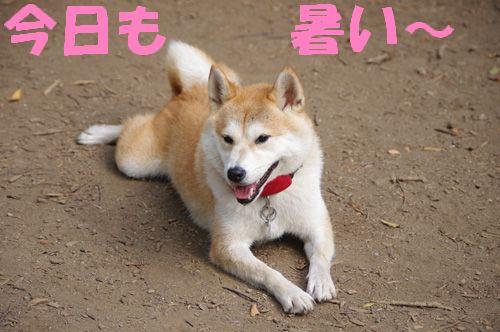 和風美人のハナコちゃん