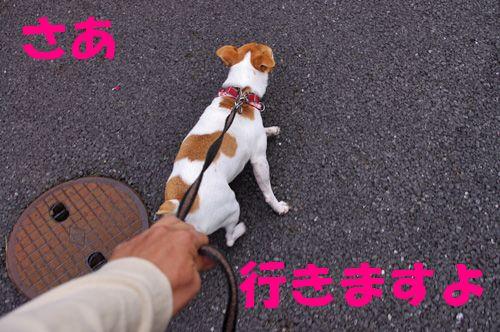 お散歩だよ~