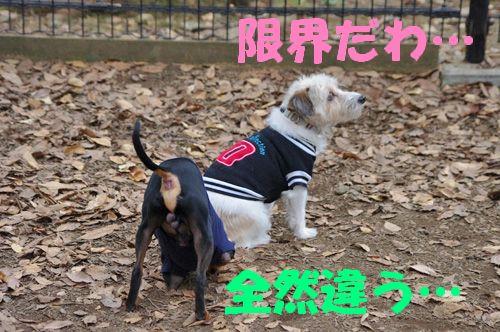 モテモテメイちゃん3