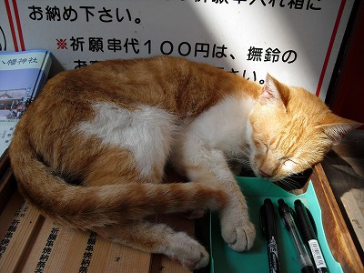 blog_CIMG0032.jpg
