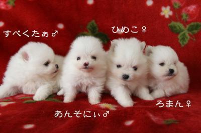 4赤ちゃんズ