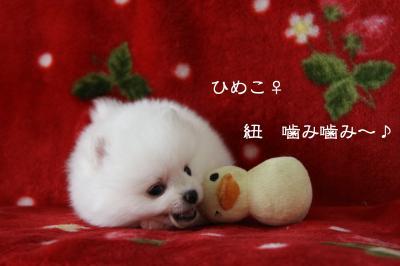 ひめこ 玩具2