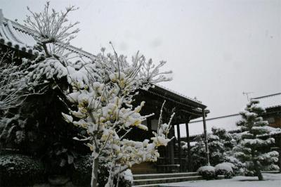 20100206_02.jpg