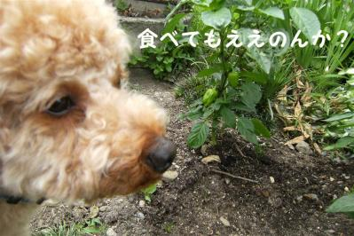 20100613_01.jpg