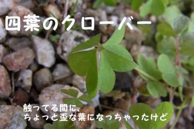 20110327_03.jpg