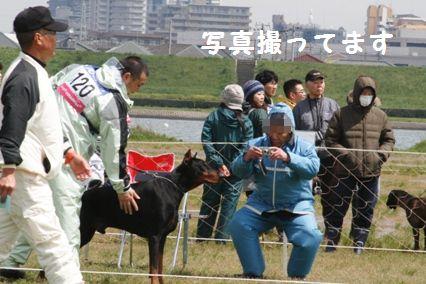 D犬審査3