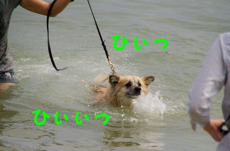 強制水泳5