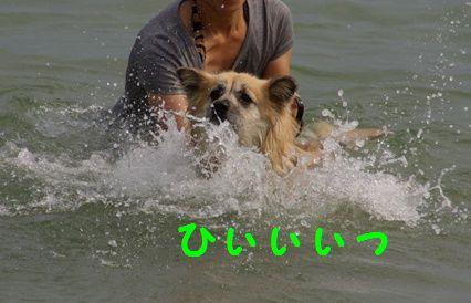 強制水泳4