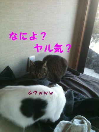 IMG_0621_20101007215756.jpg
