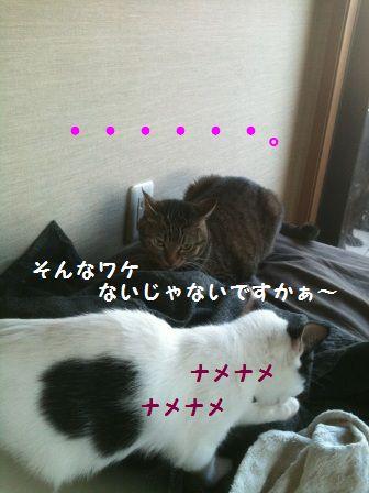 IMG_0622.jpg