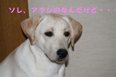 IMG_5104_20100128082213.jpg
