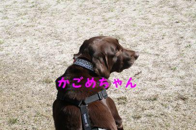 IMG_6219.jpg
