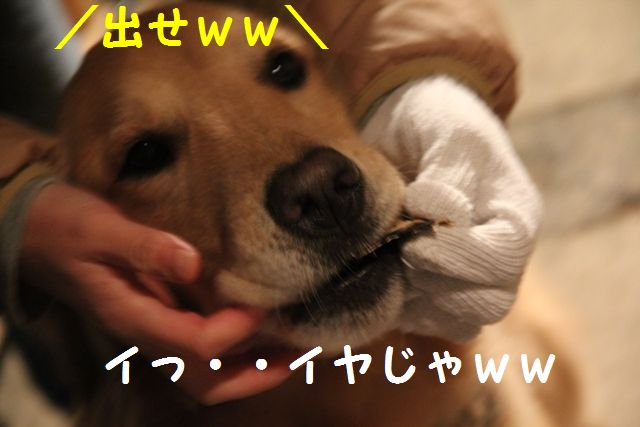 IMG_7221_20101210102202.jpg
