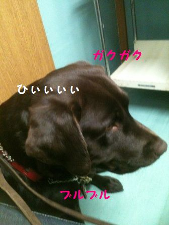 chacha_20101012222642.jpg