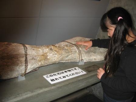 IMG_0041恐竜の骨をさわる実織