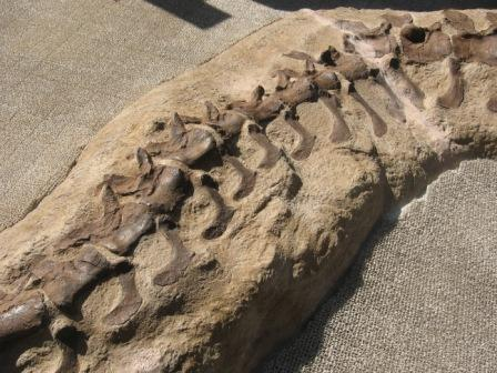 IMG_0046外にあった恐竜の骨