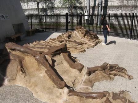 IMG_0047外にあった恐竜の骨と実織