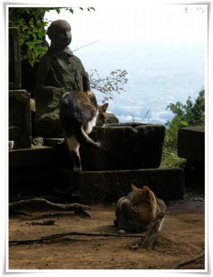 弘法山の猫