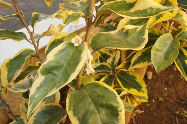 ギルドエッジの花1