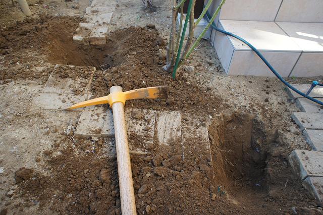 つるアイスバーグ穴掘り1