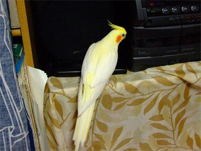 piro20091024-3.jpg