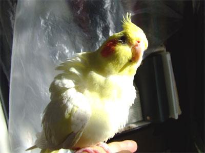 piro20091027-1.jpg